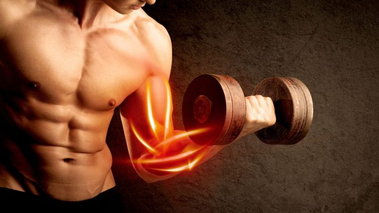 How Important Is Genetics In Building Muscle?